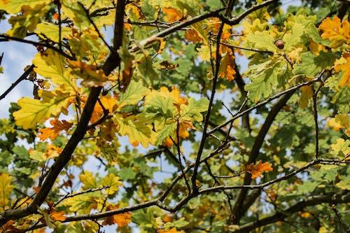 Kostenloses Stock Foto zu ast, bäume, herbstfarben, herbstlaub