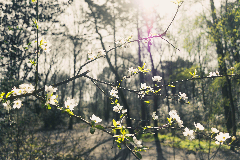 Ảnh lưu trữ miễn phí về ánh sáng mặt trời, cây, công viên, hệ thực vật