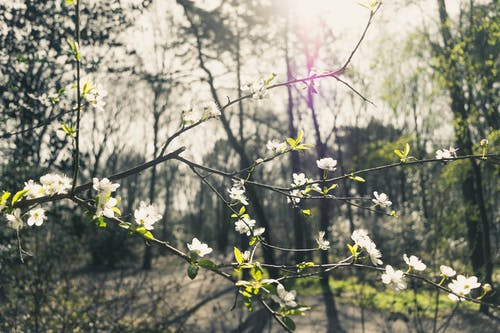 Selective Focus Photo of a White-flowering Tree in the Middle of Woods during Day