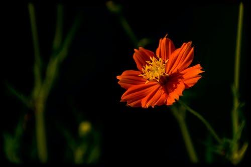 Безкоштовне стокове фото на тему «lightroom, вродлива, квітка, красиві квіти»