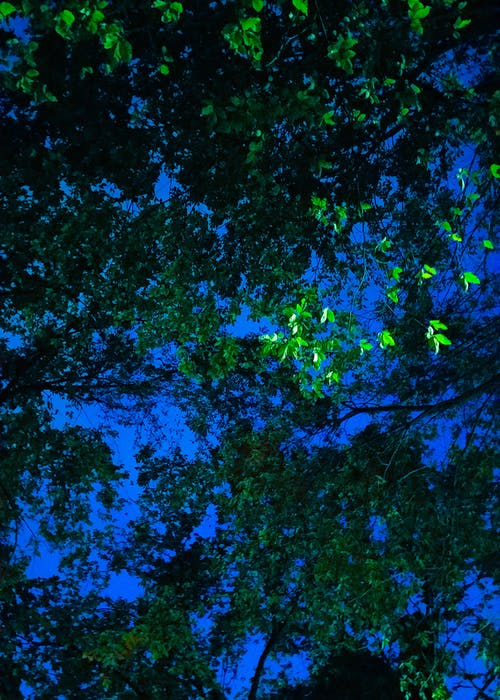Free stock photo of blue, branches, bright, green