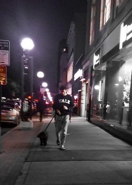 Free stock photo of candid, city, city life, dog