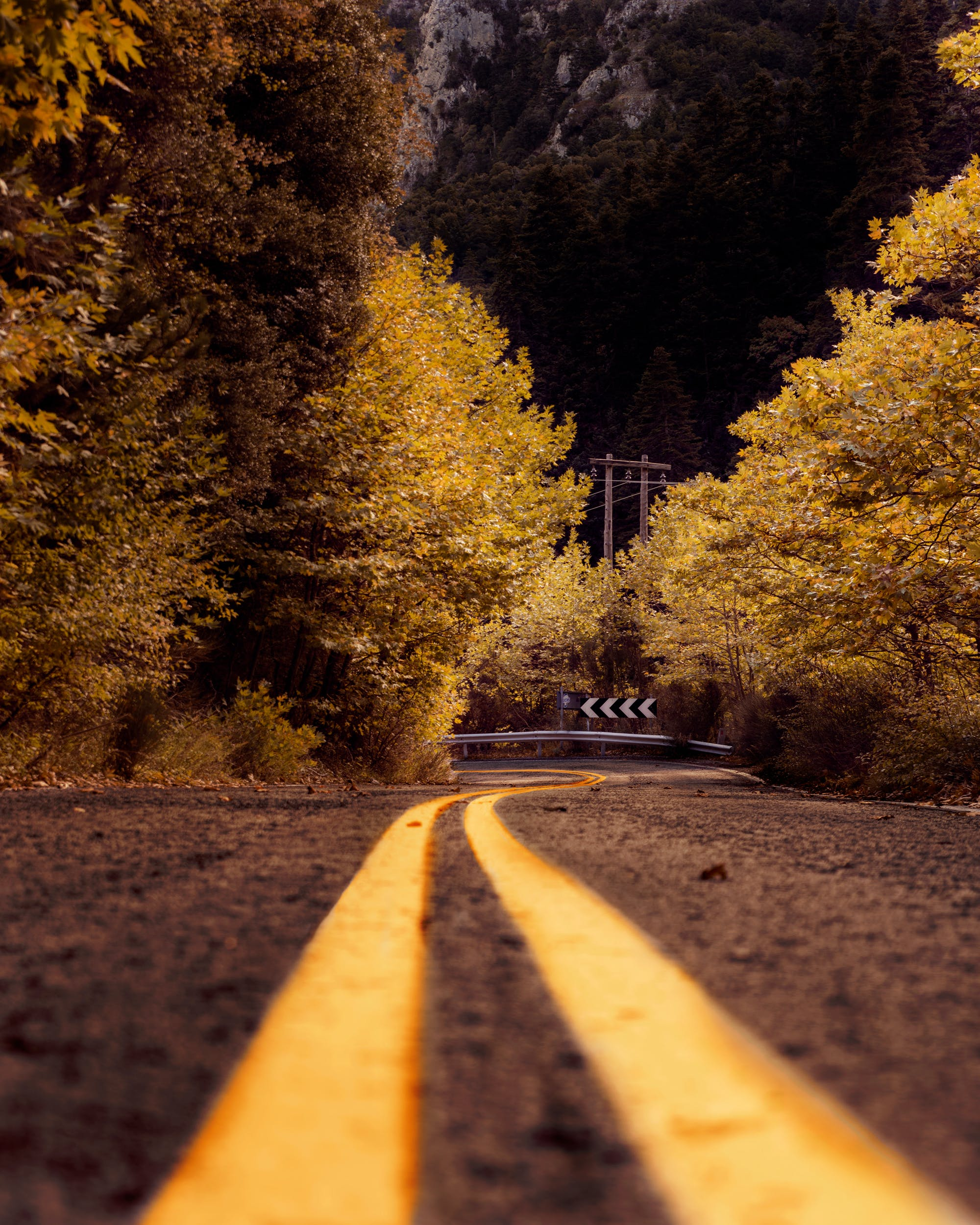 Sepia Photography of Asphalt Road in Between Trees