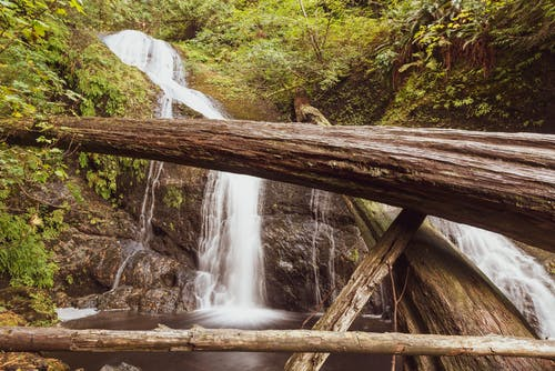 çağlayan, kütükler, orman, Su içeren Ücretsiz stok fotoğraf