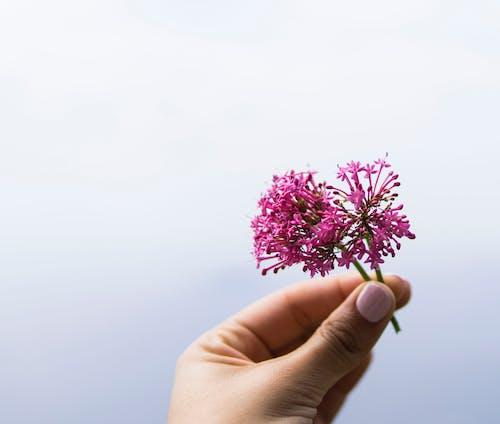 Foto d'estoc gratuïta de bonic, flora, flors, flors morades