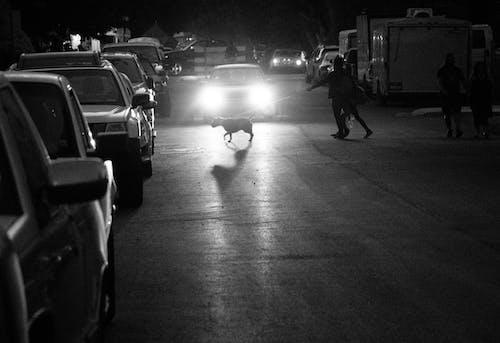 Monochrome Photo of Person Holding Dog Leash