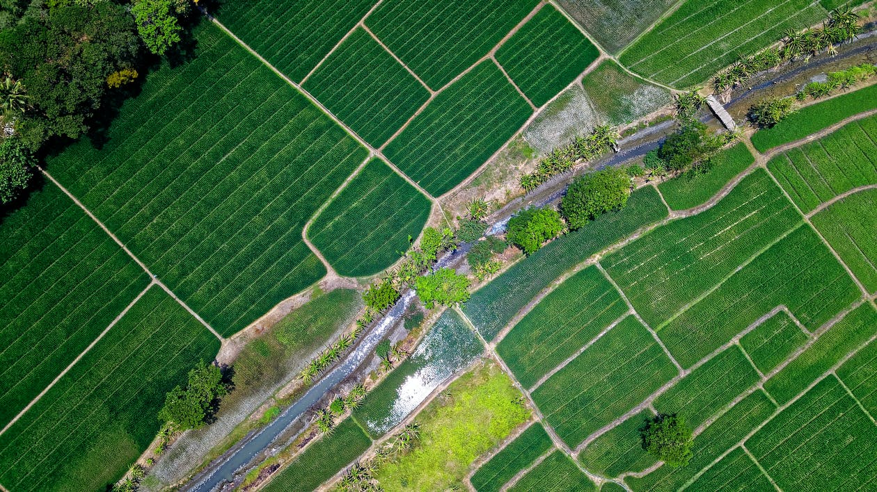 Bird's Eye View Of River In Middle Of Green Fields