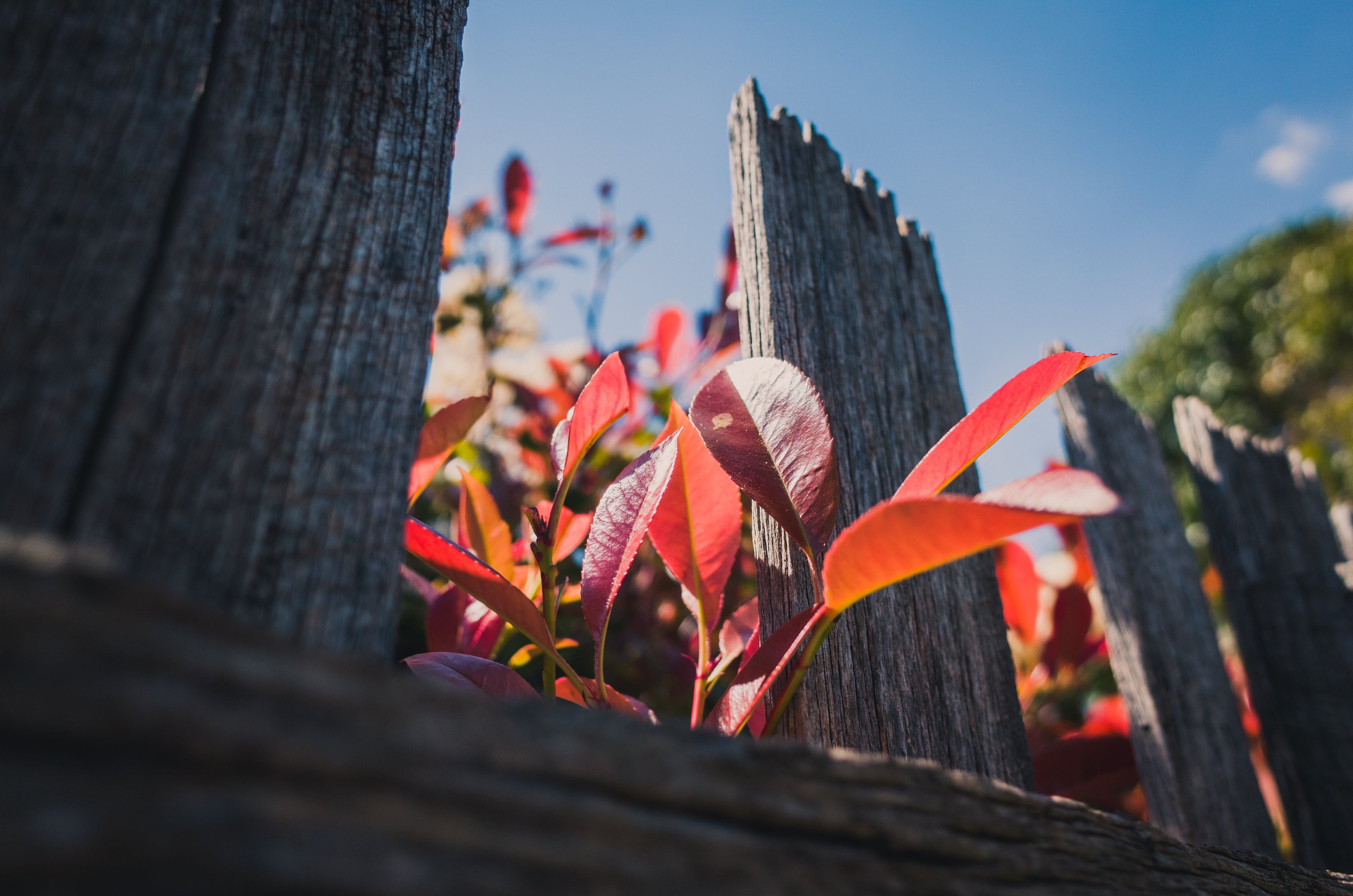 Low Angle Photo of Red Leafed Plants