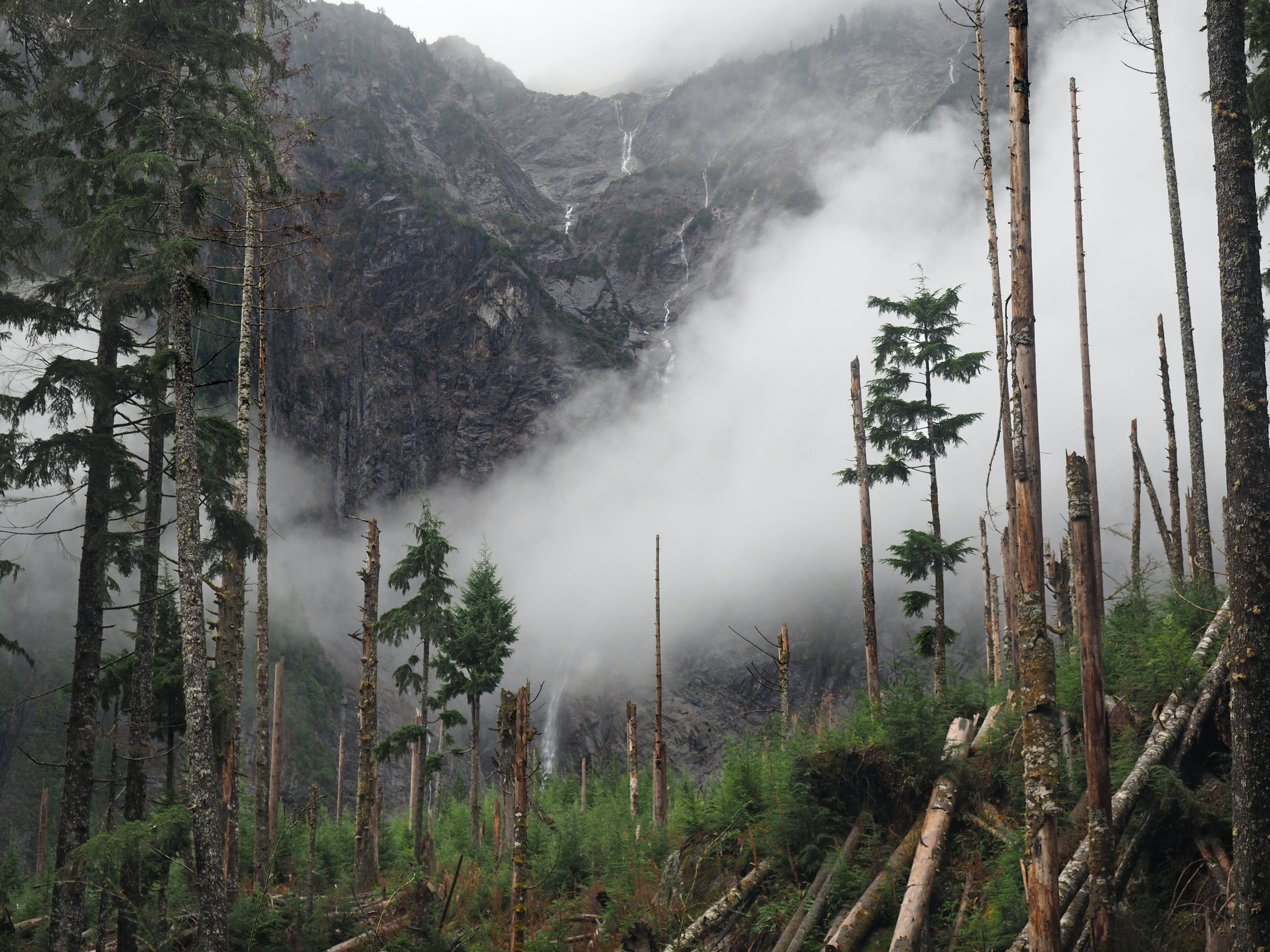 Photo of Forest in Front of Mountains