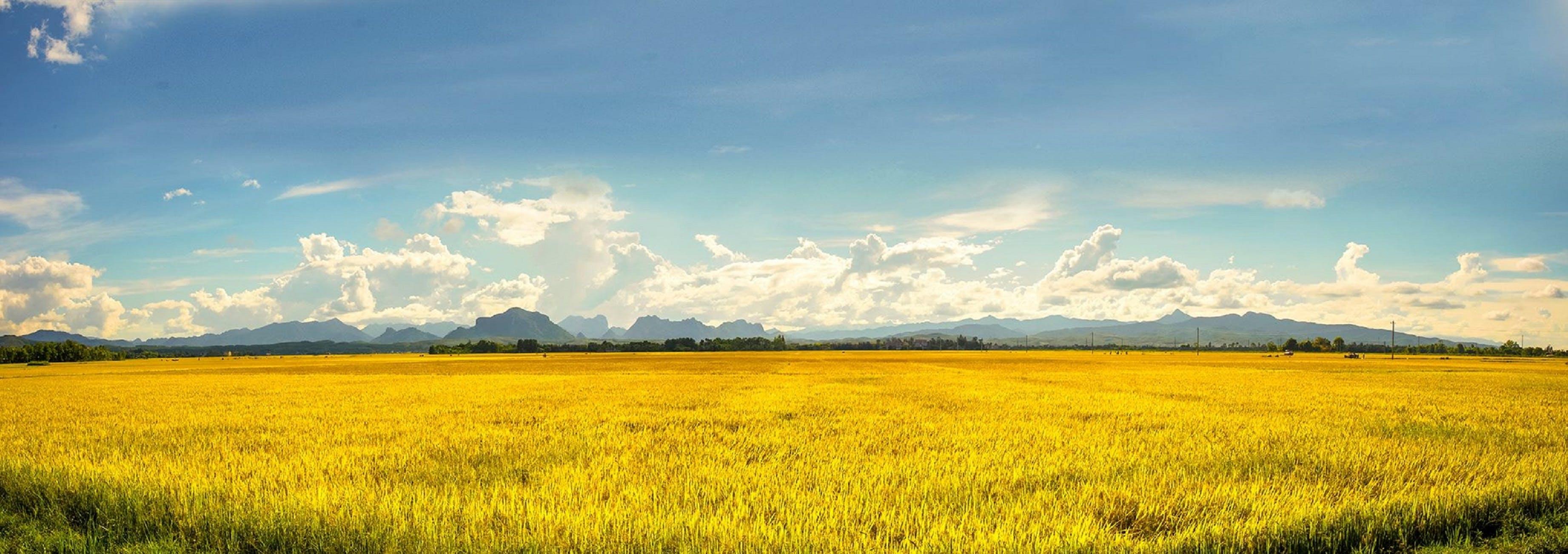 Free stock photo of bio, crop, farm, farming