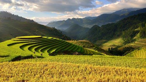 Asya, Asyalı, bitki, çiftçi içeren Ücretsiz stok fotoğraf