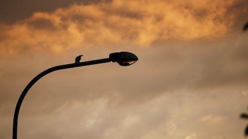 คลังภาพถ่ายฟรี ของ ตะวันลับฟ้า, มีพายุ, มืดครึ้ม, เสาไฟ