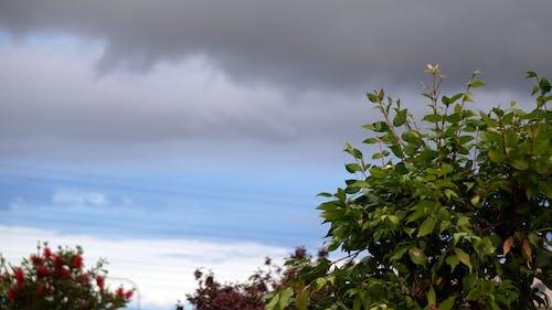 คลังภาพถ่ายฟรี ของ ฝน, พายุ, มืดครึ้ม, เมฆ