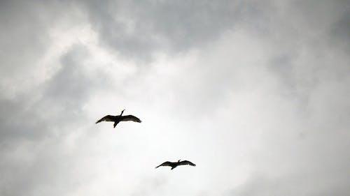 คลังภาพถ่ายฟรี ของ การบิน, มืดครึ้ม, โรงแรมไอบิส