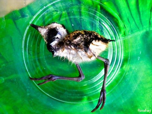 Imagine de stoc gratuită din animal de casă, animale, fotografi, fotografie
