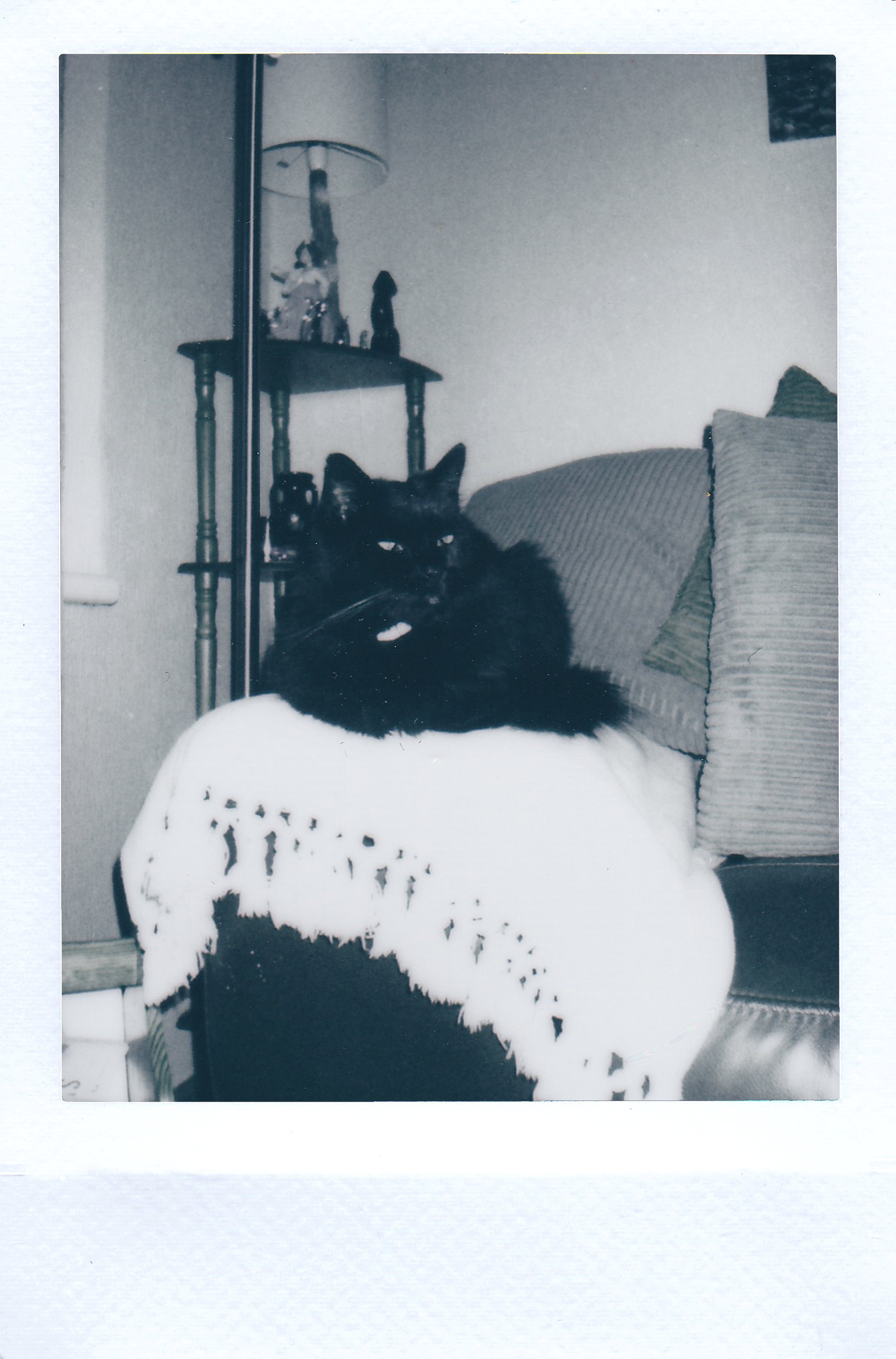 Photo of a Black Cat