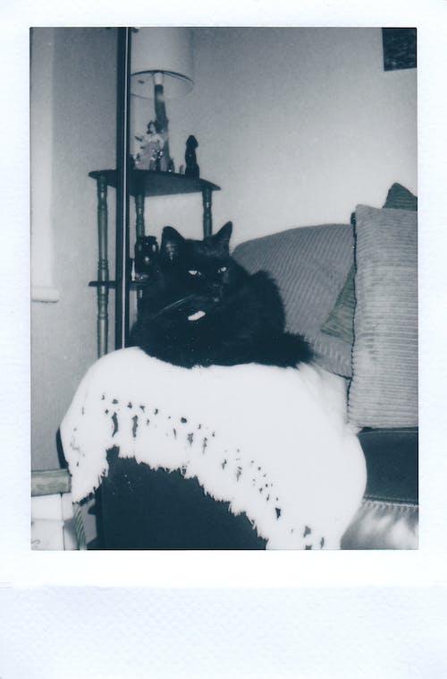 休息, 冷靜, 動物攝影, 家貓 的 免费素材照片