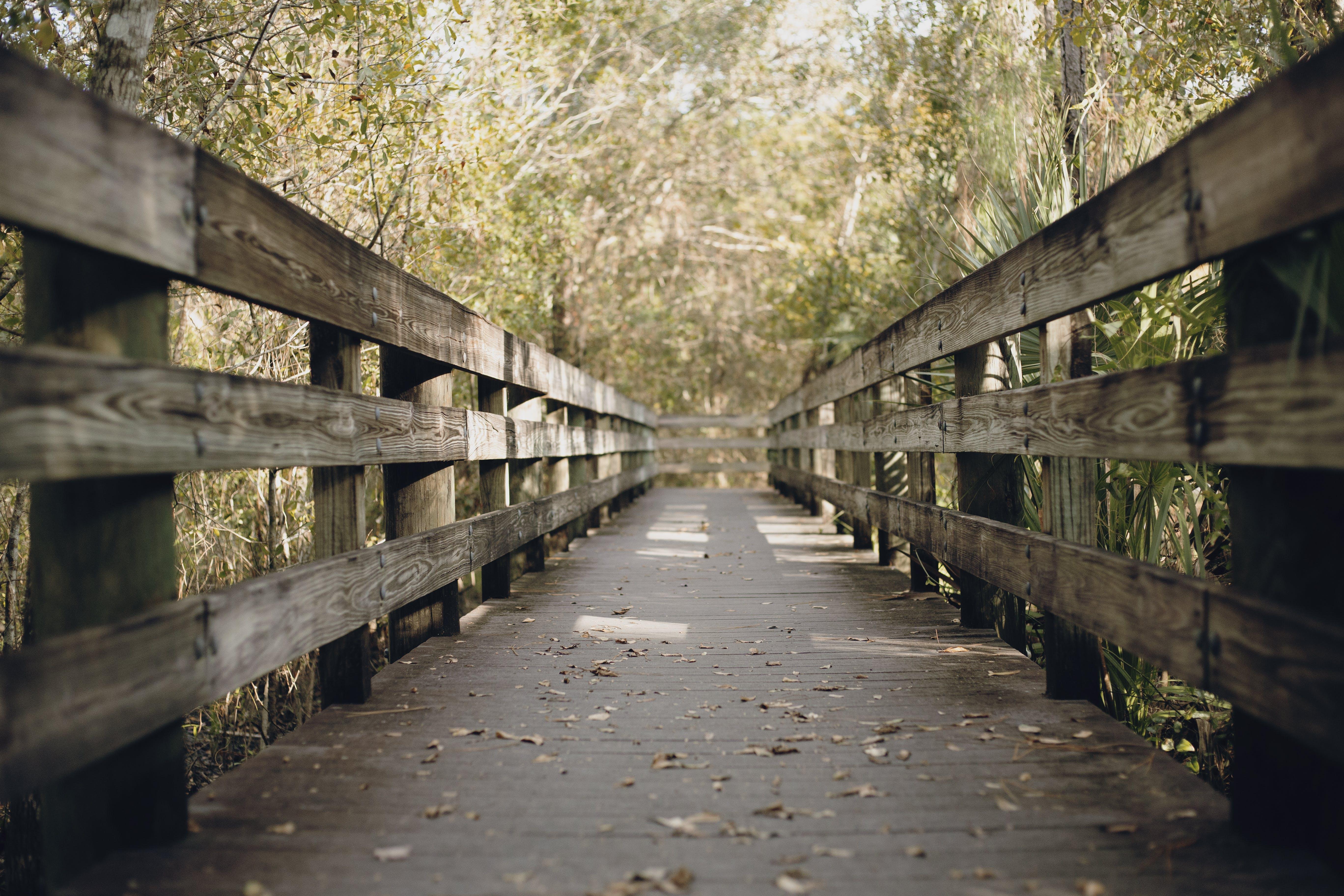 Brown Wooden Bridge In Lush Forest