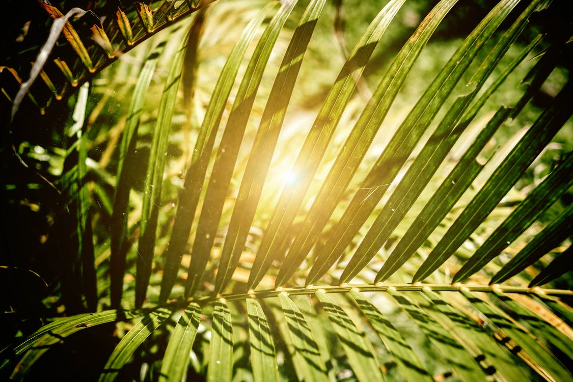 การเจริญเติบโต, ต้นไม้, ธรรมชาติ