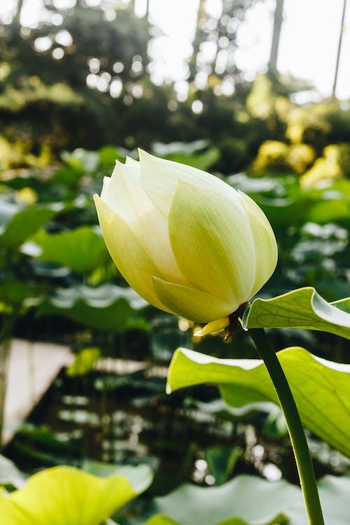 HD 바탕화면, 꽃 바탕화면, 꽃이 피는, 꽃잎의 무료 스톡 사진