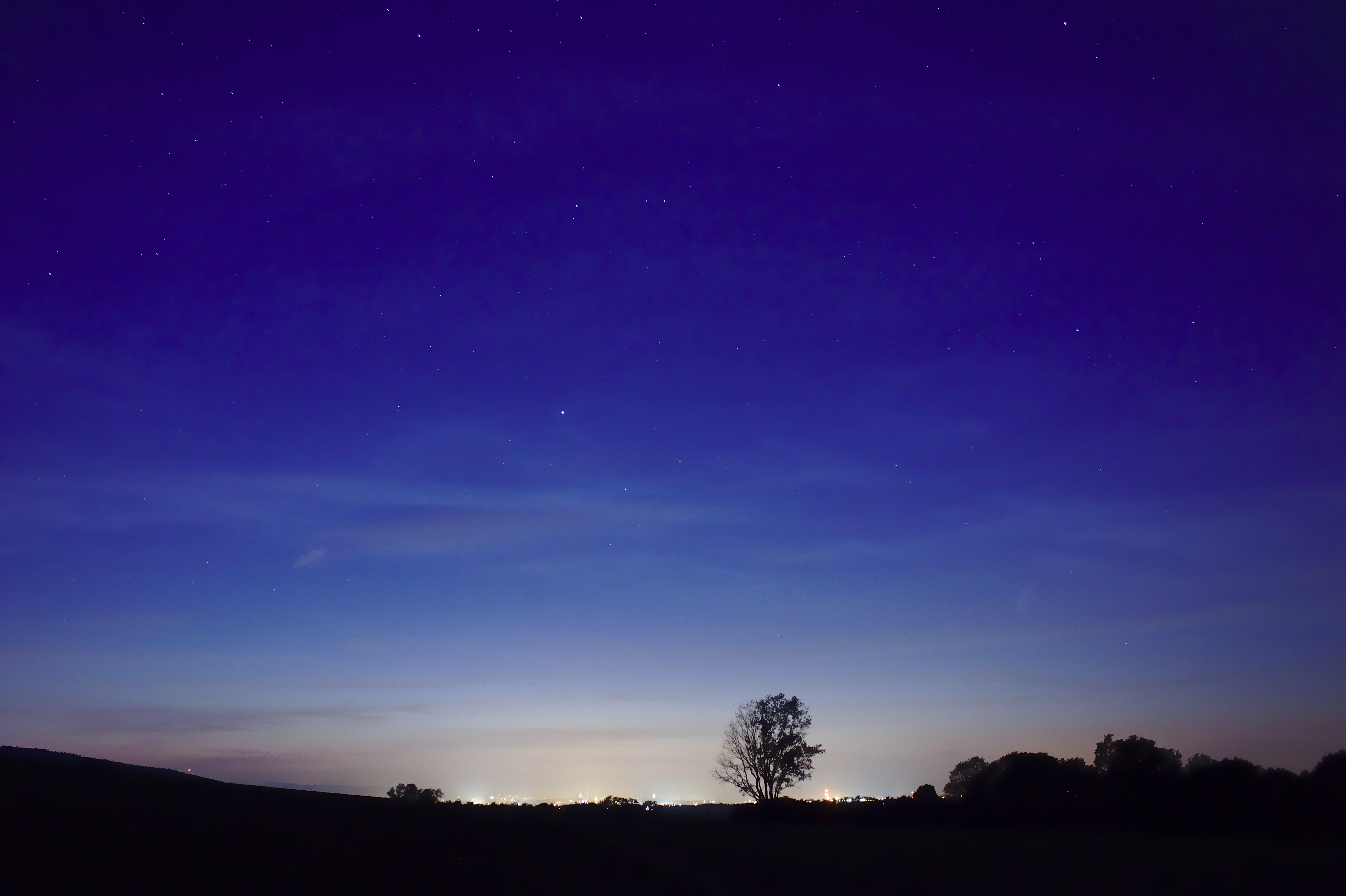 Foto d'estoc gratuïta de arbre, cel nocturn, clareja, estrella