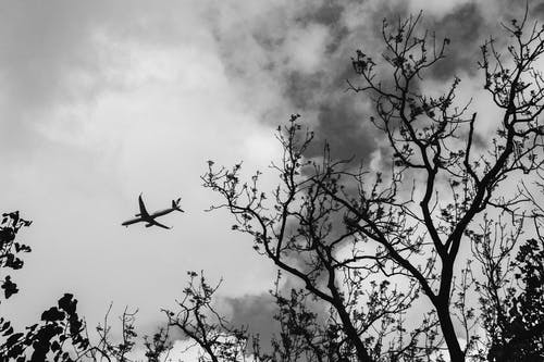 Photos gratuites de arbres, aviation, avion, branches d'arbre