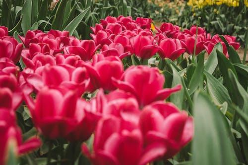 Ingyenes stockfotó finom, gyárak, gyönyörű virágok, HD-háttérkép témában