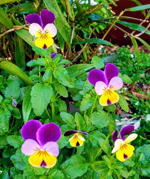 Бесплатное стоковое фото с красивые цветы, сад цветов, цветник