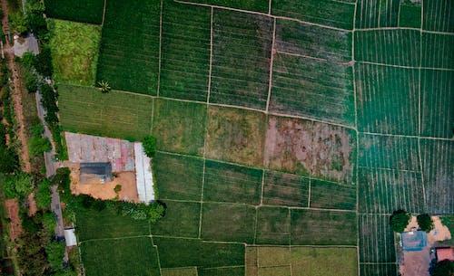 Foto profissional grátis de aéreo, aerofotografia, agricultura, antena