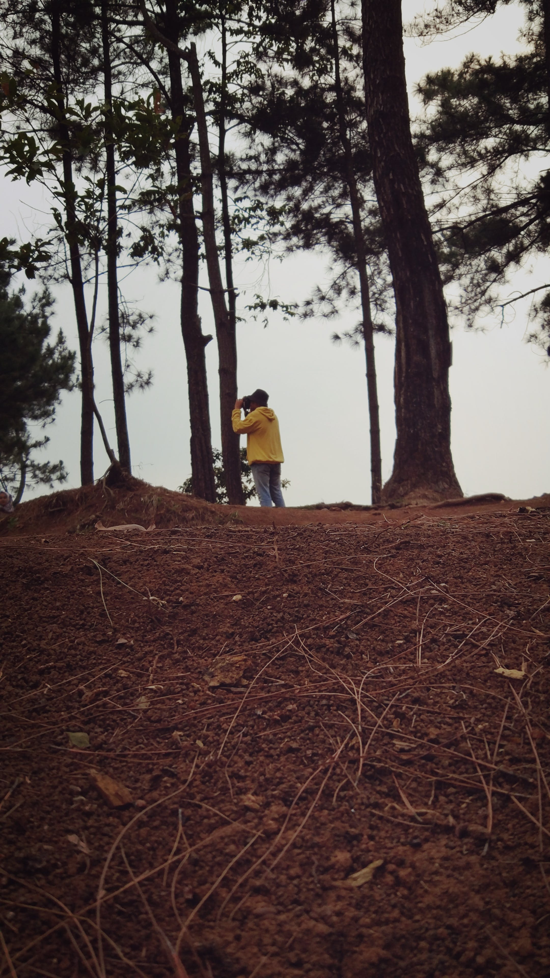 Person Standing in Forest