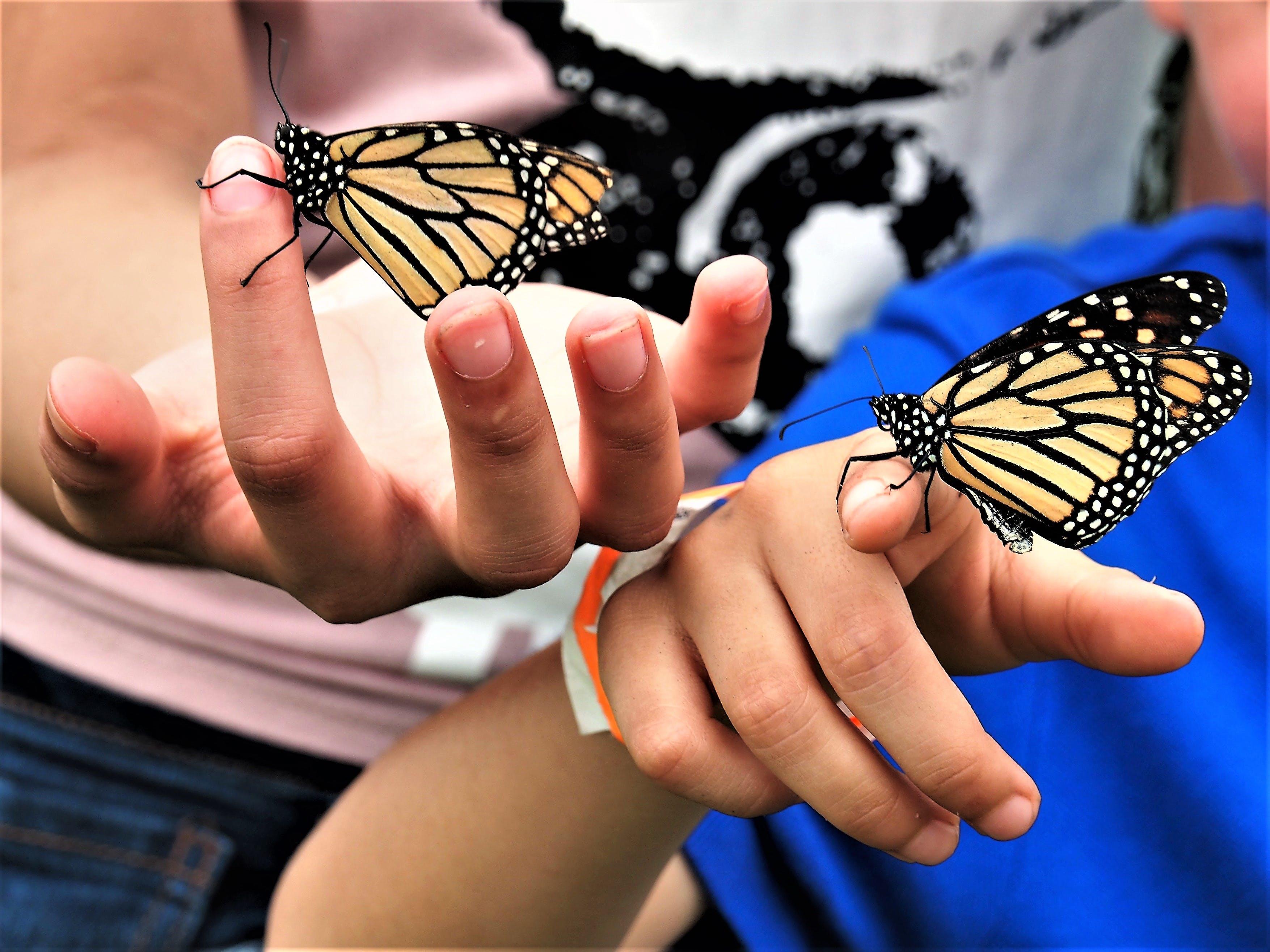 Free stock photo of butterflies, hands