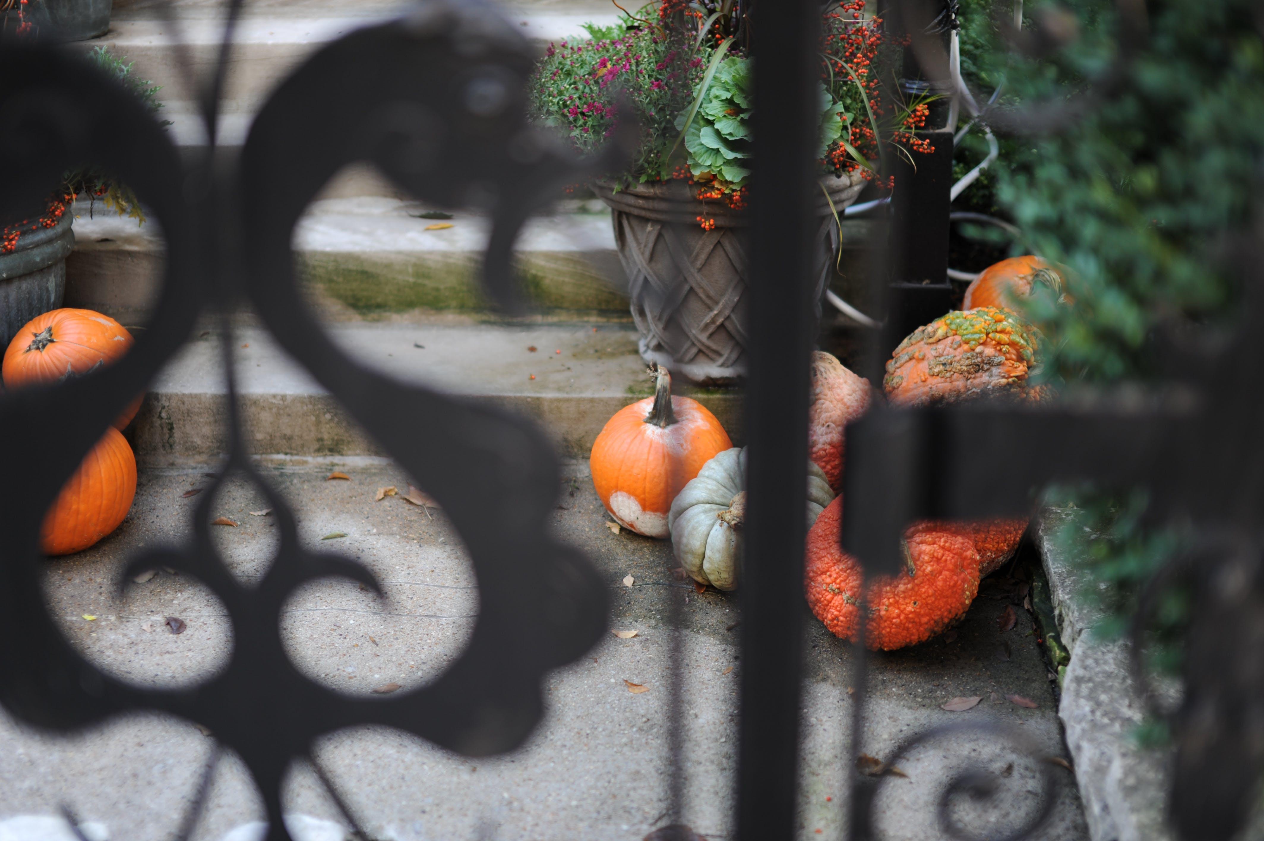 Pumpkin on Gray Cement Floor