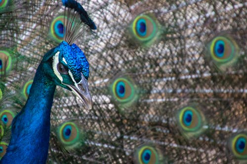 Photos gratuites de animal, bleu, coloré, cou