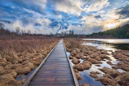 Fotobanka sbezplatnými fotkami na tému britská kolumbia, divá príroda, divočina, drevený