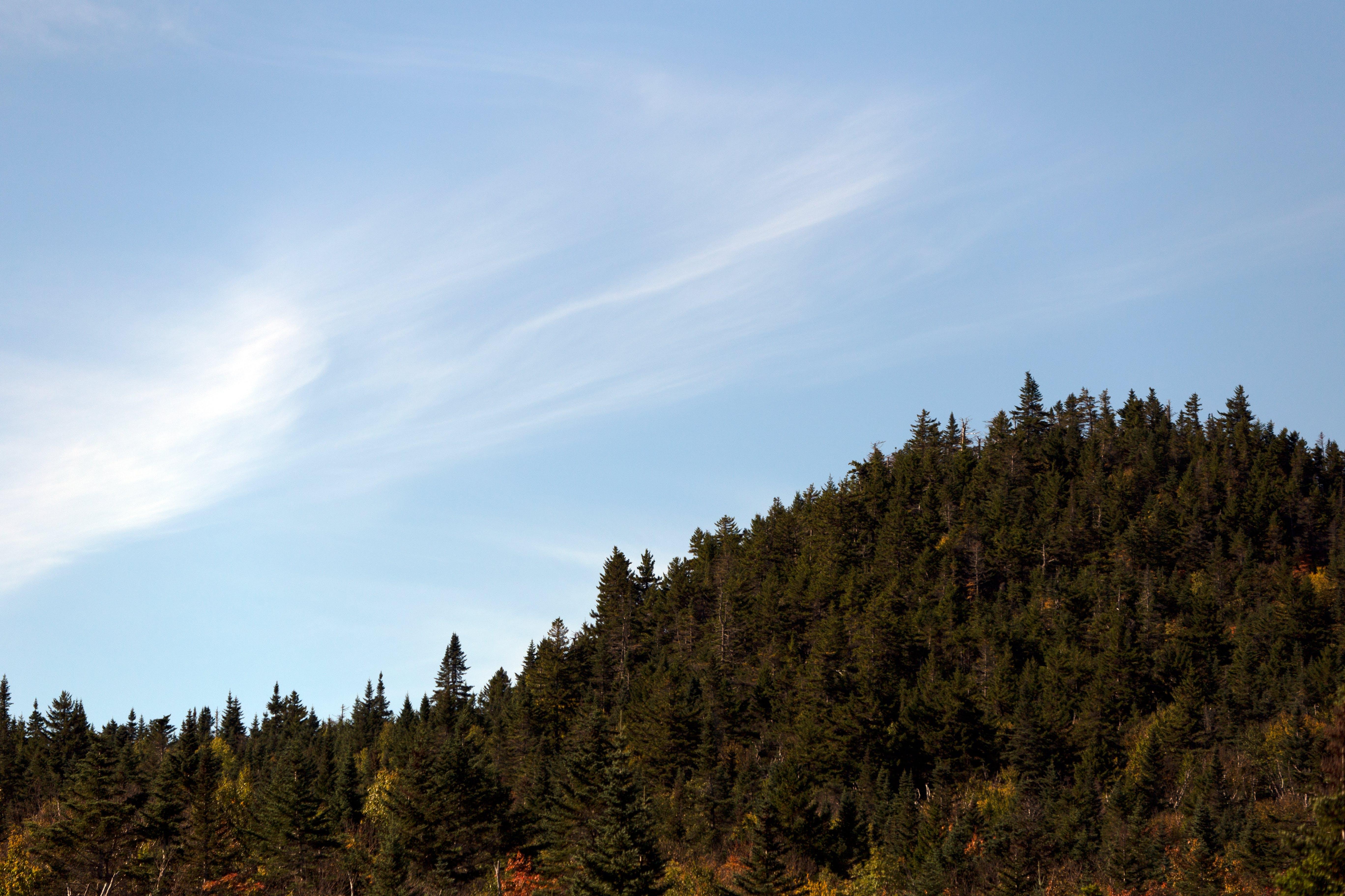 Gratis stockfoto met berg, bomen, conifeer, dageraad