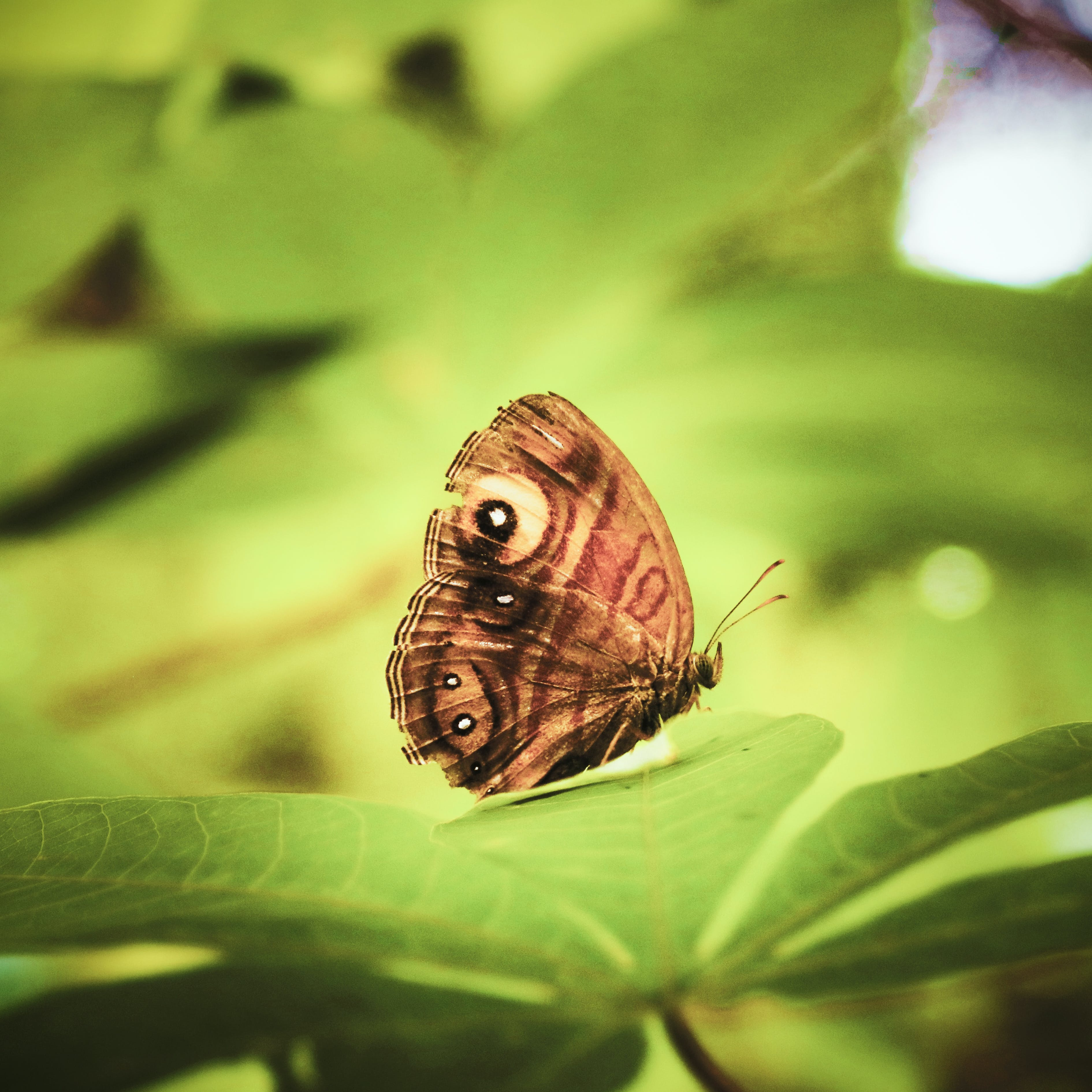 Free stock photo of beautiful, butterfly, butterfly on leaf, green