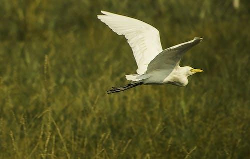 Безкоштовне стокове фото на тему «камера nikon, крила, любитель тварин, політ»