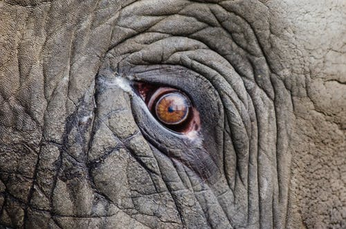 Foto d'estoc gratuïta de animal, arrugues, balances, elefant