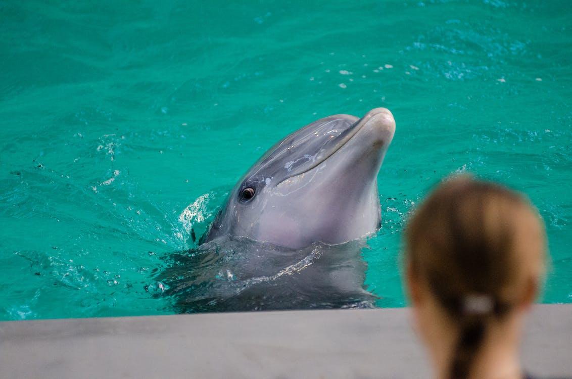 акваріум, вода, дельфін