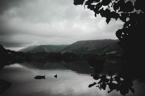 Free stock photo of after the rain, dark, dark green