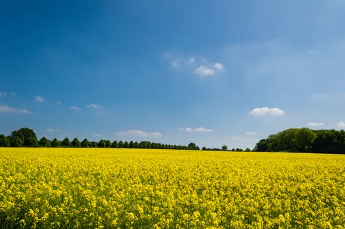 Δωρεάν στοκ φωτογραφιών με αγρόκτημα, γήπεδο, καλλιεργήσιμο έδαφος, κανόλα