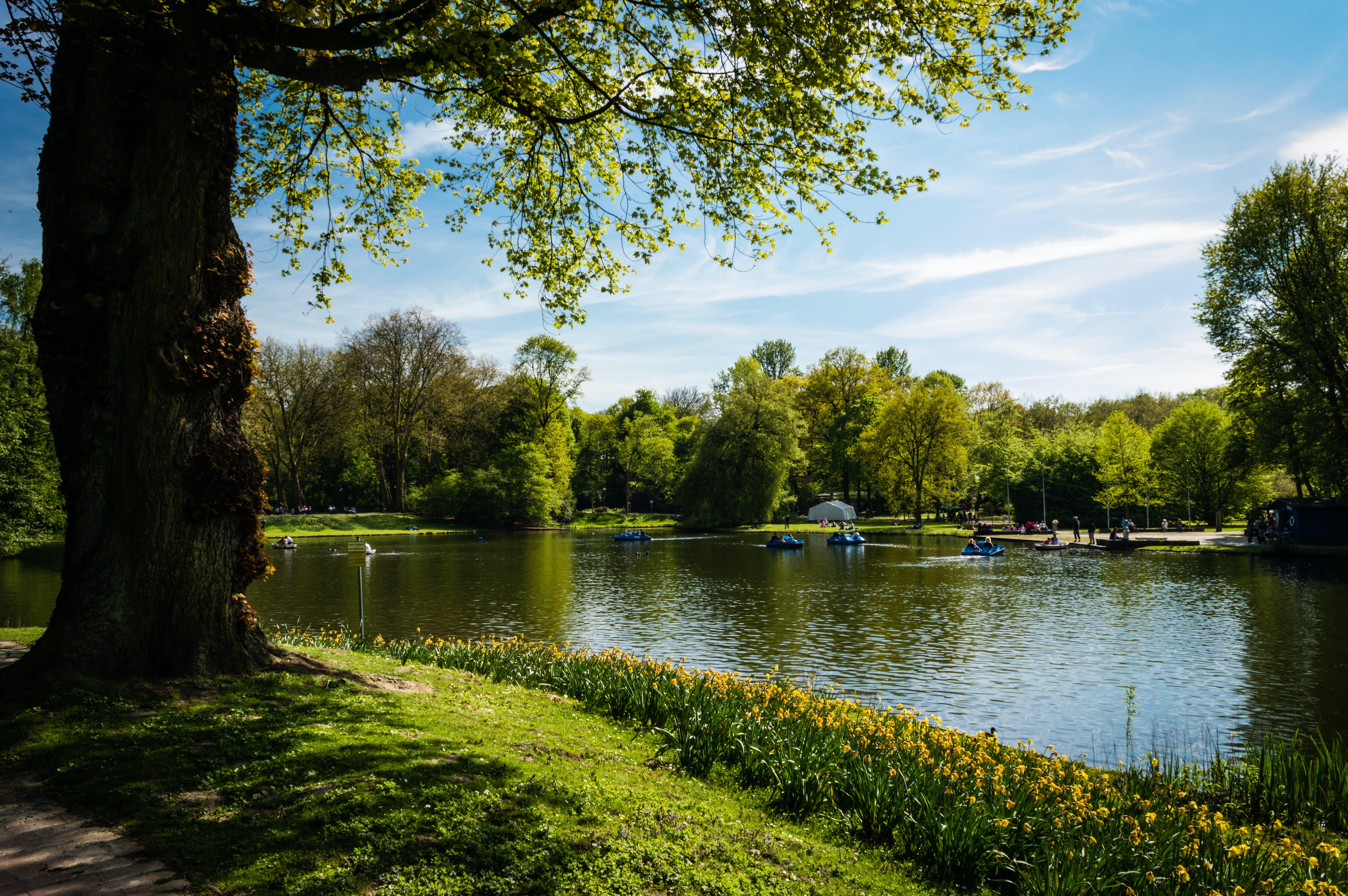 Бесплатное стоковое фото с вода, водный транспорт, деревья, живописный