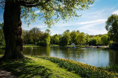 公園, 戶外, 景觀, 樹木 的 免費圖庫相片