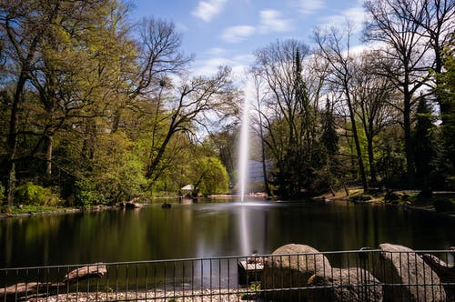 Foto d'estoc gratuïta de aigua, arbres, estany, parc
