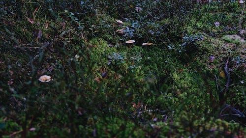 の無料の写真素材