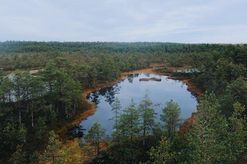 Photos gratuites de arbres, bois, eau, environnement