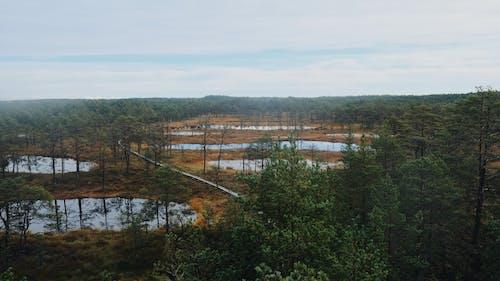 エストニア, 木, 森林, 環境の無料の写真素材