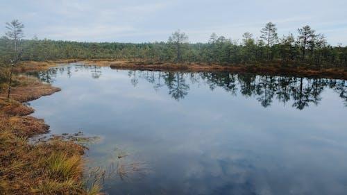 エストニア, 木, 森林, 沼地の無料の写真素材