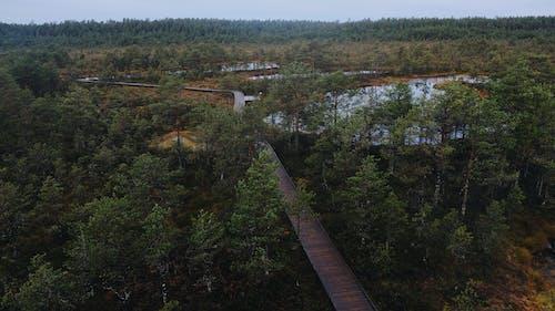Gratis stockfoto met bomen, Bos, Estland, kou