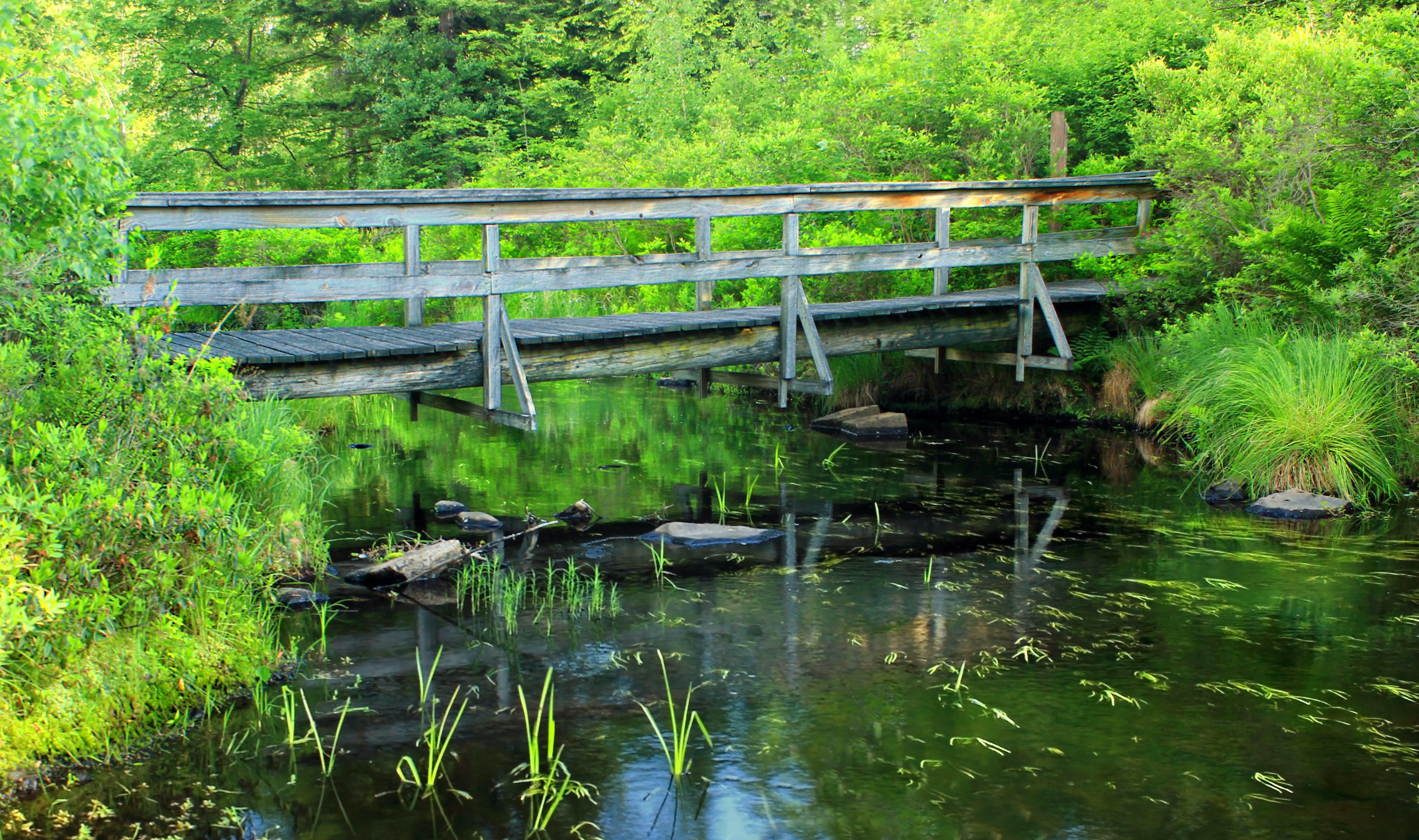 Безкоштовне стокове фото на тему «вода, міст, трава»